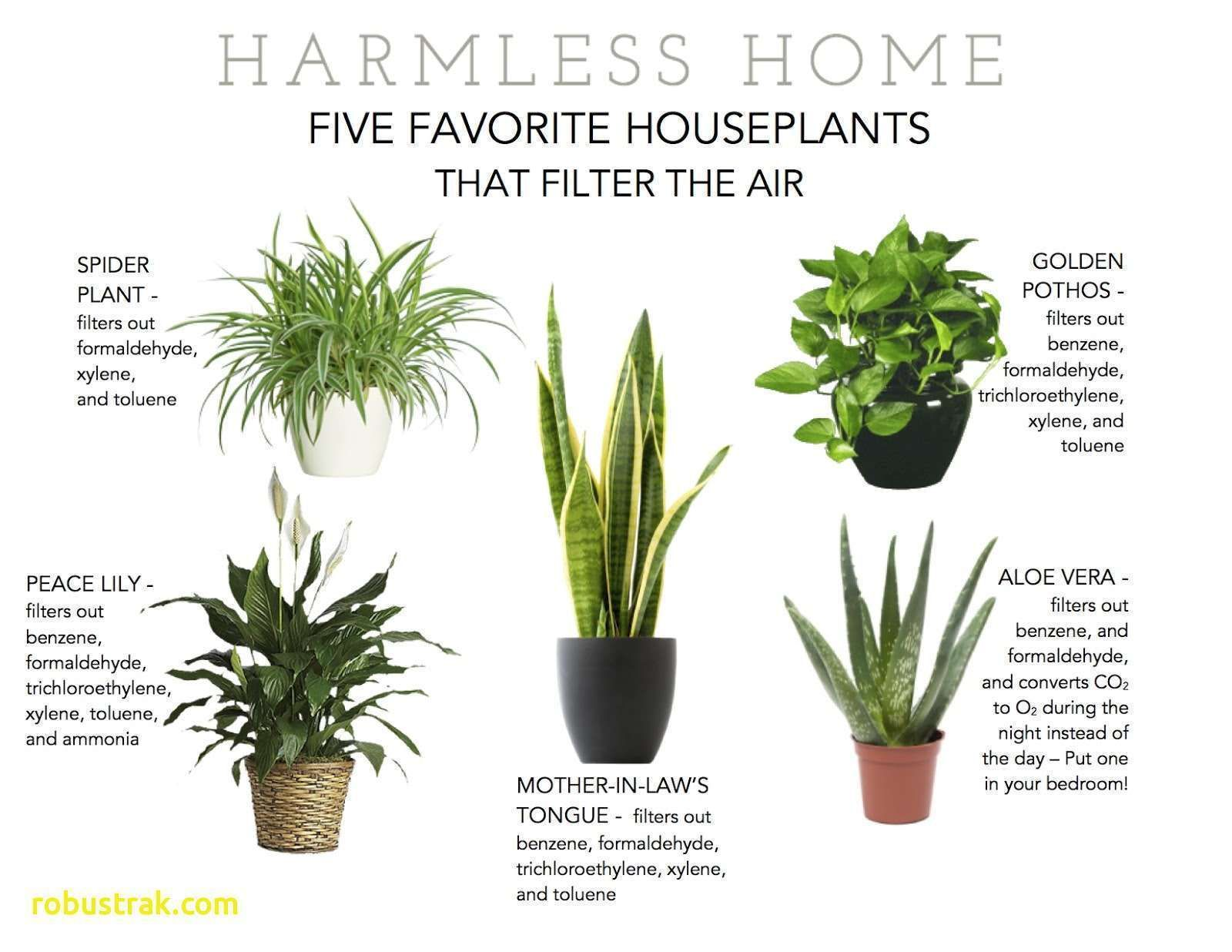 Park Art|My WordPress Blog_Are Air Purifying Plants Toxic To Cats