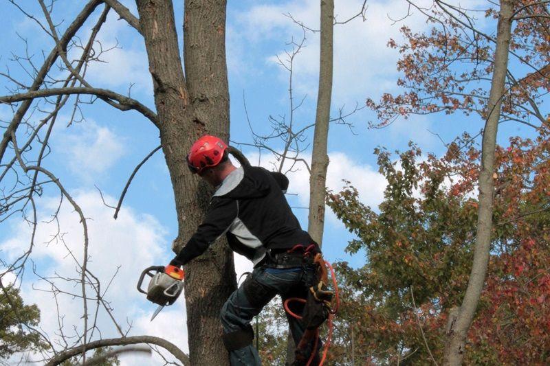 Park Art|My WordPress Blog_Branching Out Tree Services Wrexham