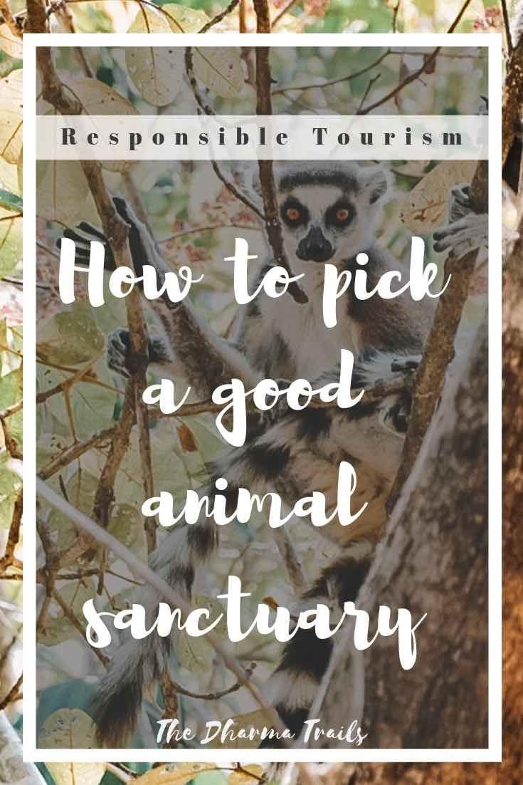 Park Art|My WordPress Blog_Wildlife Volunteer Opportunities Near Me