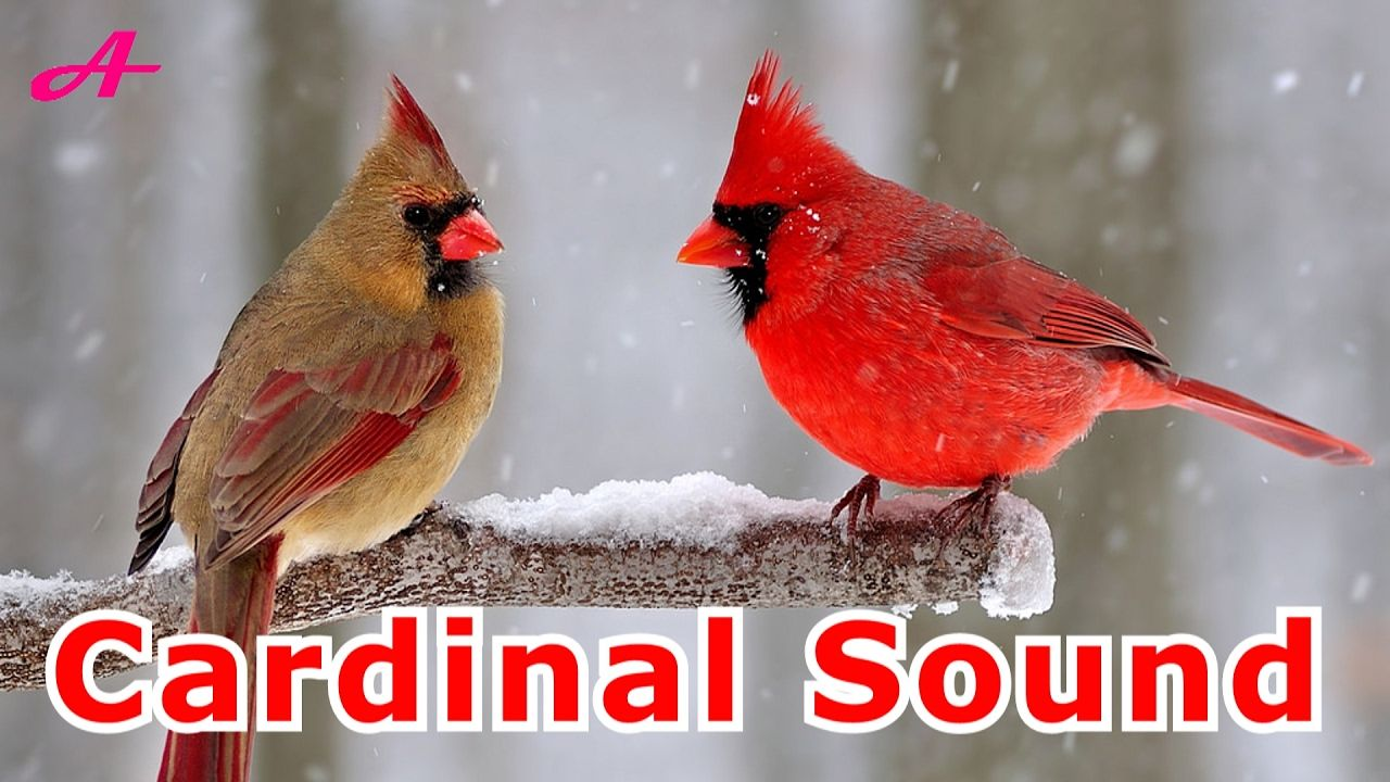 Park Art My WordPress Blog_What Does A Cardinal Sound Like When It Sings