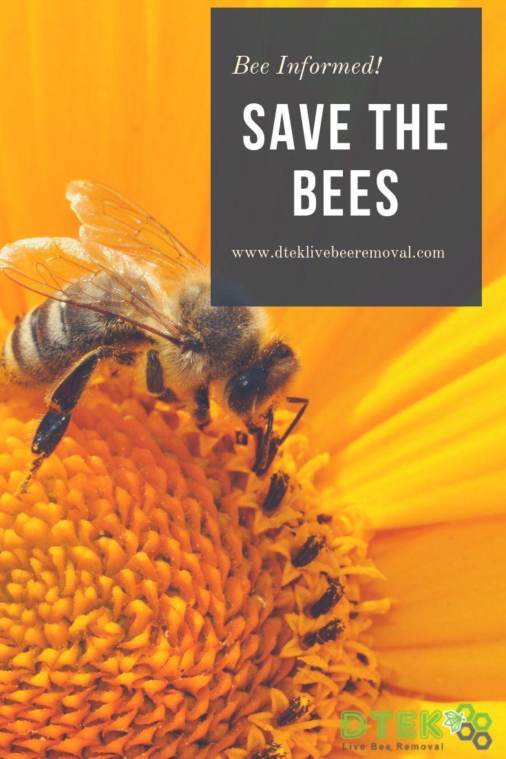 Park Art My WordPress Blog_Free Bee Removal Los Angeles County
