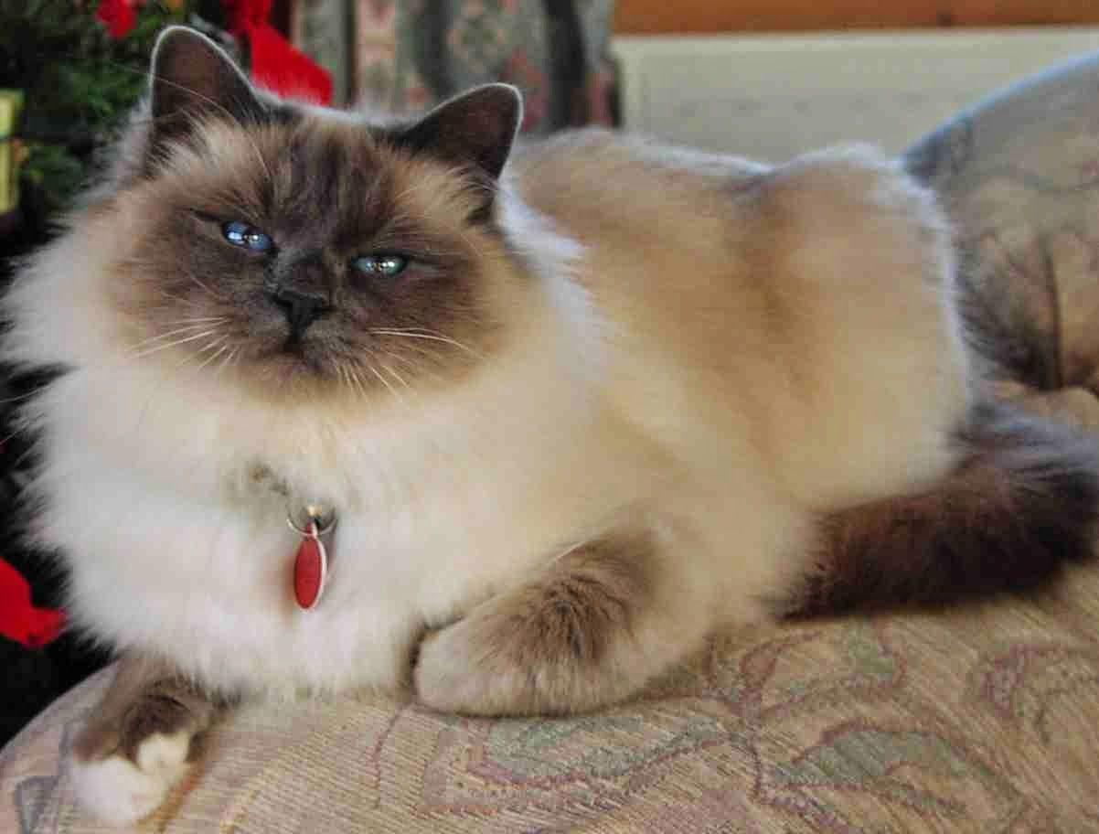 Park Art|My WordPress Blog_Burmese Kittens For Sale Victoria