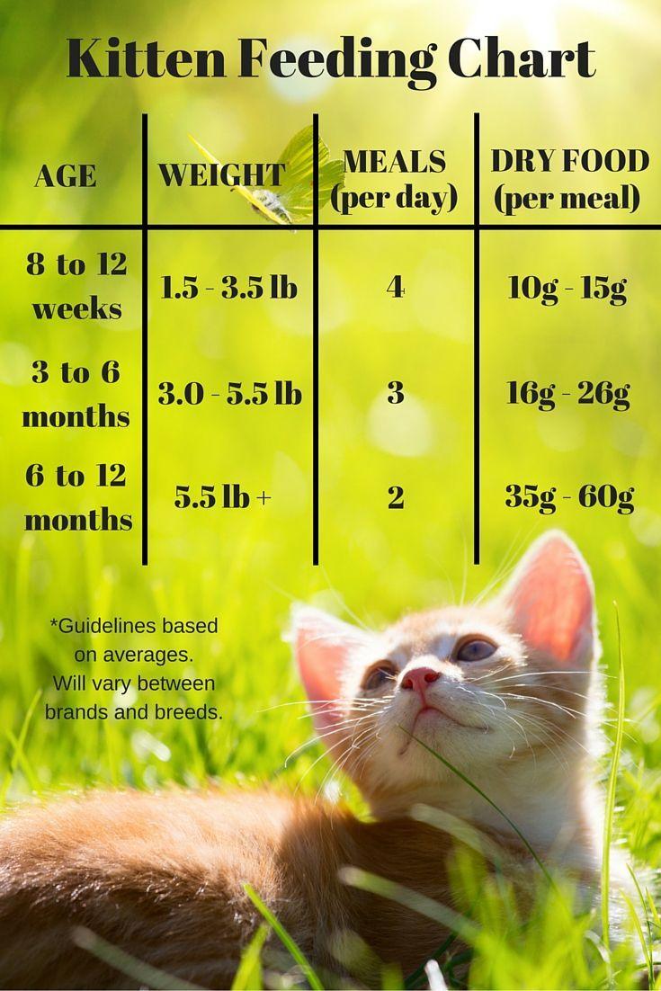 Park Art|My WordPress Blog_Baby Food For Cats Uk